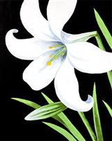 Easter Lily Canvas
